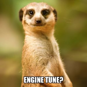 Engine tune meerkat