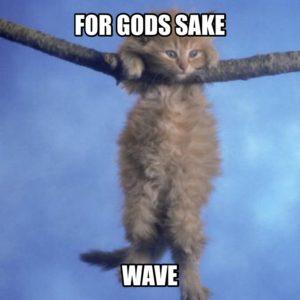 For gods sake wave kitten